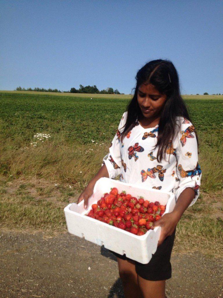 kathi jordbær