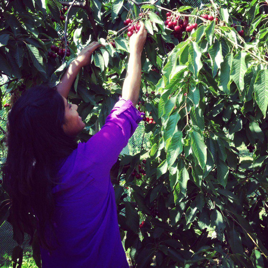 kathi kirsebær